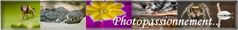 http://photopassionnement.free.fr/image/lien/ban.jpg